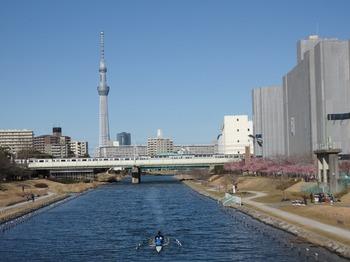 旧中川とスカイツリー.JPG